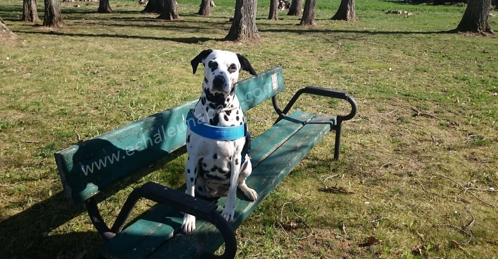 Pata a pata por la educación canina