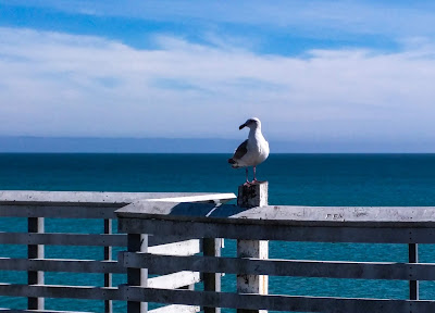 a seagull perched atop the safety railing on a pier