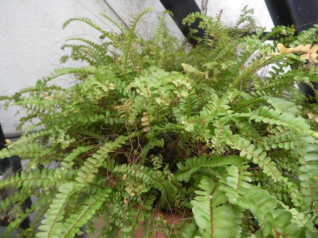 El Rincón De Ana: Plantas De Interior Que Requieren Poco