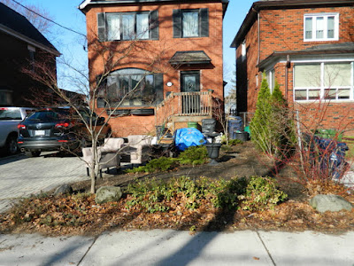 Bloor West Village Front Yard Spring Cleanup Before by Paul Jung Gardening Services--a Toronto Organic Gardener