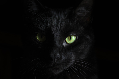 black cat in shadow