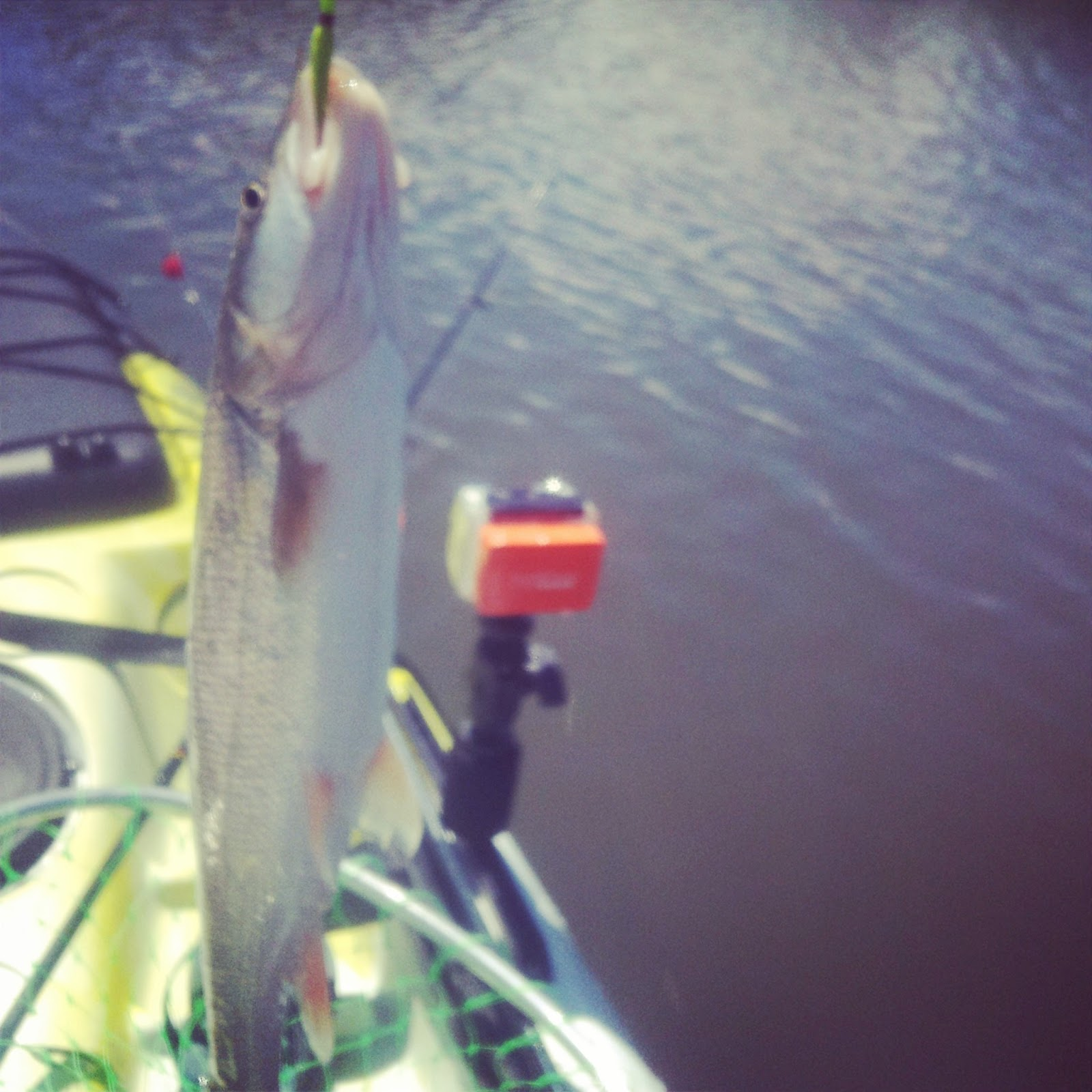 how much is a day fishing license in ca