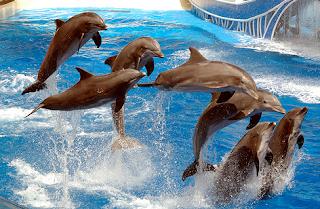 hewan terpintar dan tercerdas di dunia - lumba-lumba
