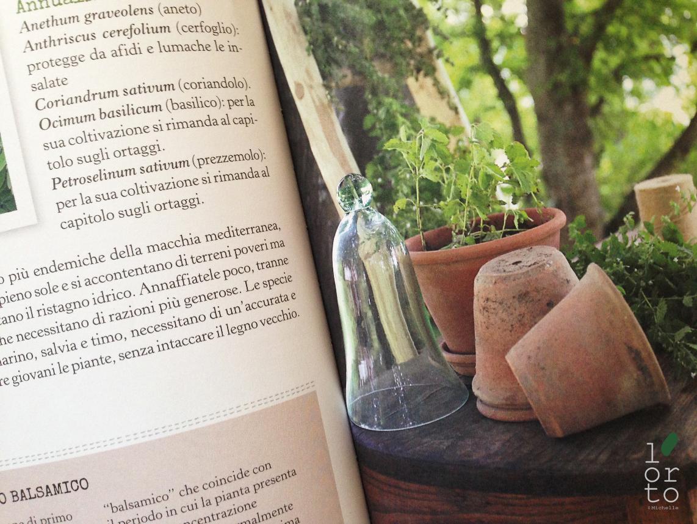 l'ortodimichelle: Più orto che giardino