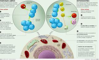 Antioxidantes para el vitiligo