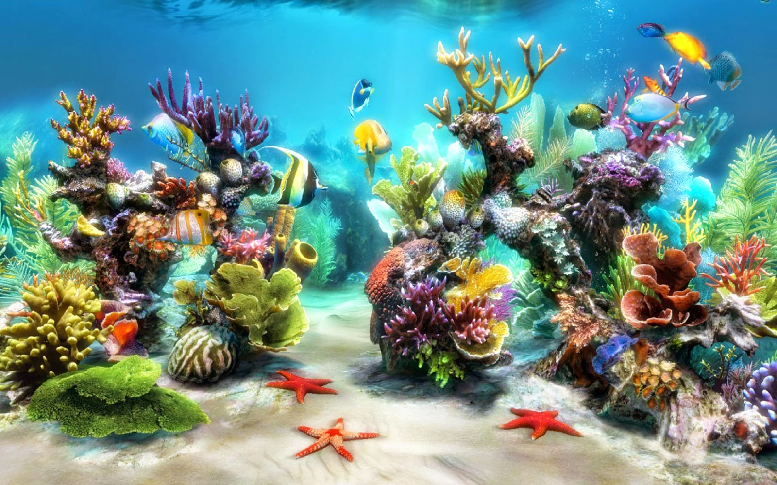 Ocean Life Desktop Background