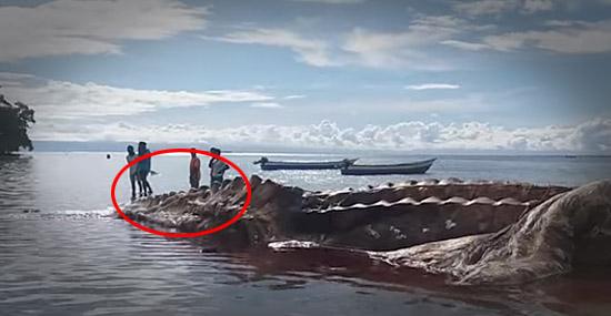 'Kraken' da Indonésia morto no mar ainda não foi identificado - Capa