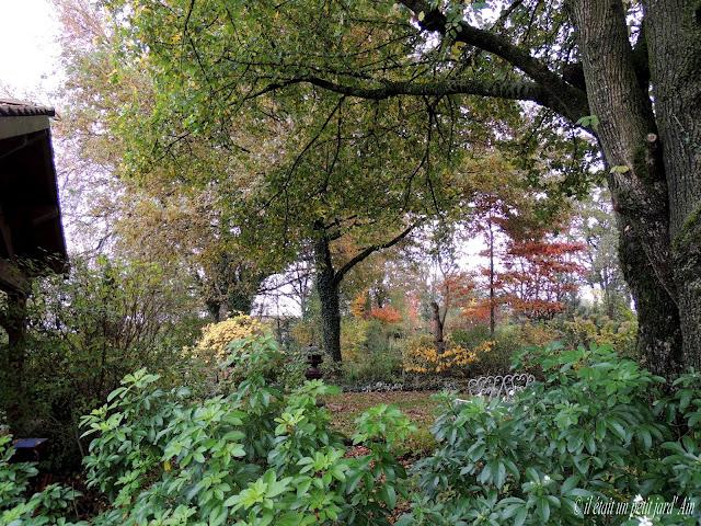 arbres et arbustes de l'automne