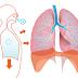 Sistema Respiratório (Exercícios)