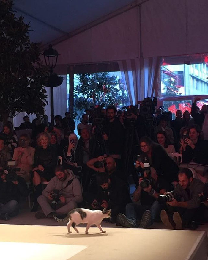 Cat Gave A Whole New Fascinating Meaning To A Fashion Show When It Randomly Joined The Catwalk