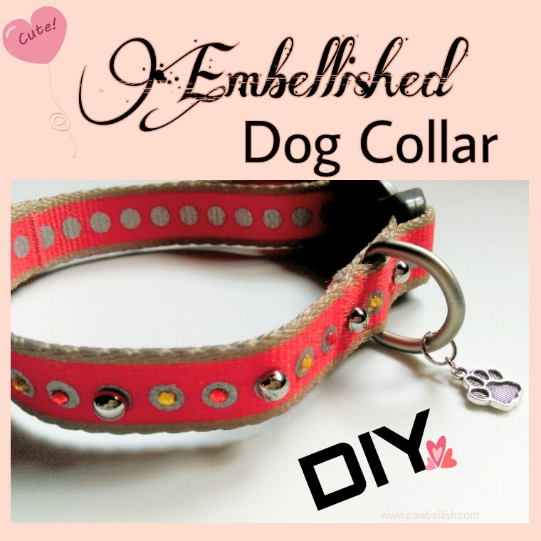 Orange dog collar embellished with gems