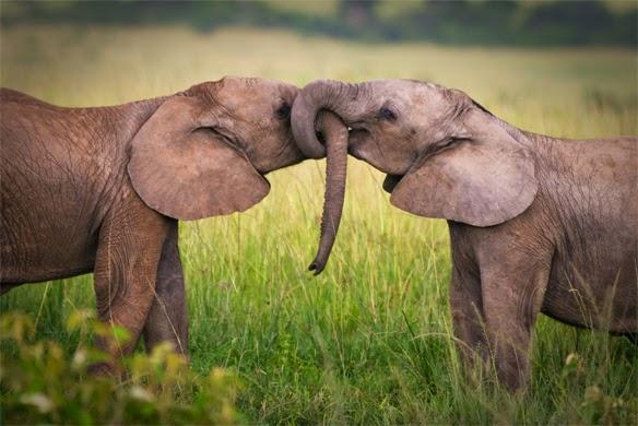 Arti Sahabat dan Kata Mutiara Persahabatan Terbaik 2014
