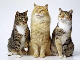 ebook sobre gatos