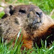 Ground Hog Day 2014: The 7 Gifts of Waiting