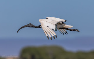 Canon EOS 7D Mark II: Test and Birds in Flight Photography Shoots