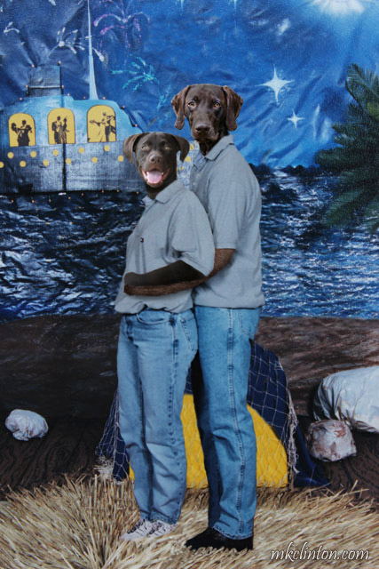 Lab and GSP dressed in jeans and shirts
