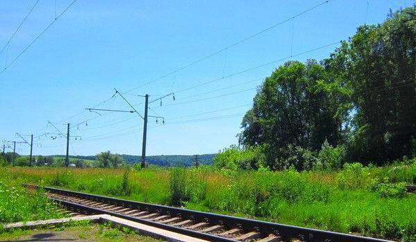 Trees near railways