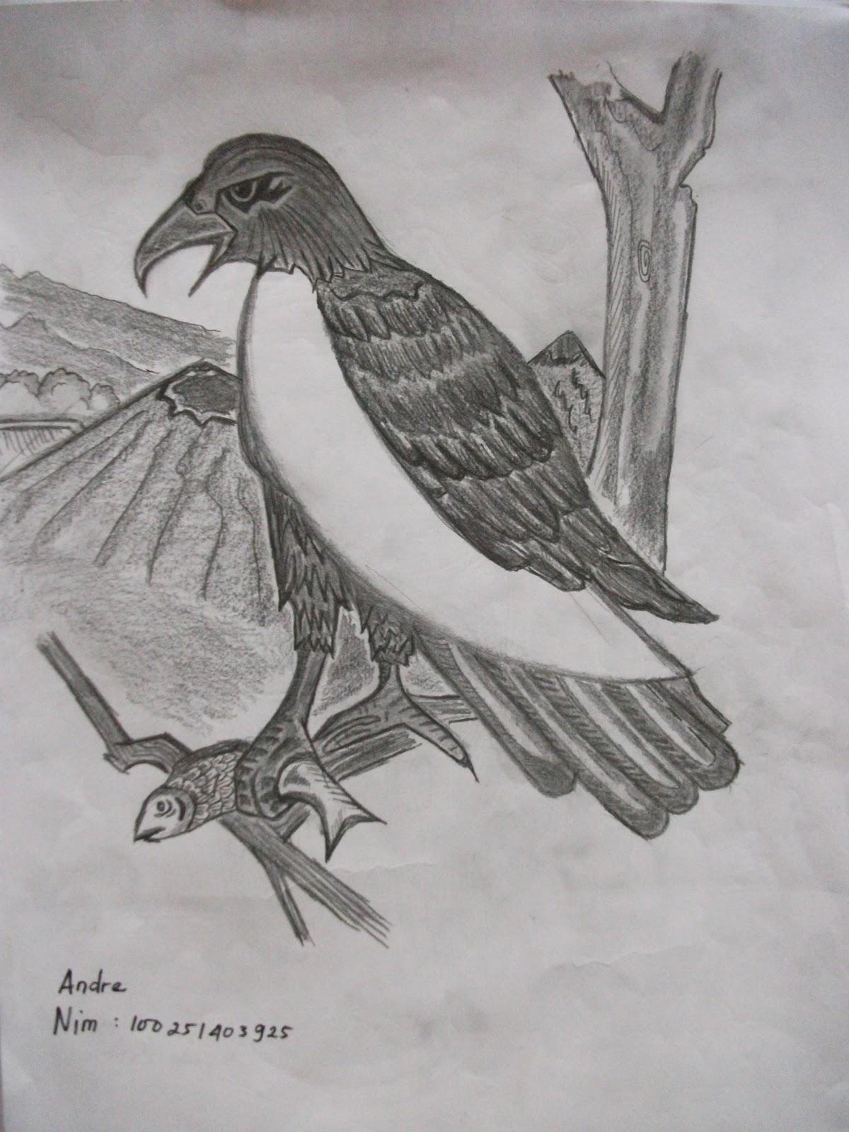 The gallery for --> Sketsa Burung Merak