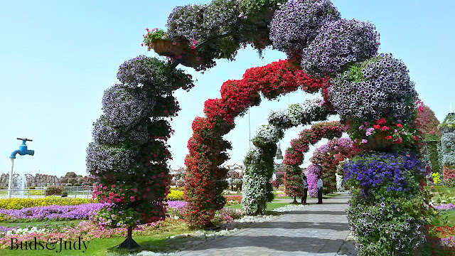 Dubai Adventure: Miracle Garden