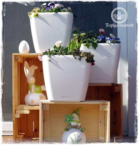 Gartenblog Topfgartenwelt Topfgarten + DIY mit Knagglig (Kiste) und Töpfen viel Platz auf kleinem Raum schaffen - Blumendeko mit Hornveilchen und Bellis passend für den Frühling und Ostern: selbstbewässernde Töpfe bepflanzt mit Frühlingsbumen