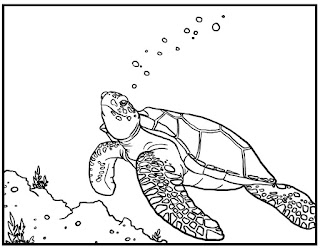 Cute Sea Turtle Coloring Pages Animals