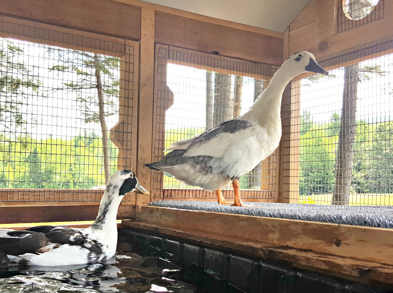 Introducing the urban coop company round top duck house for House duck