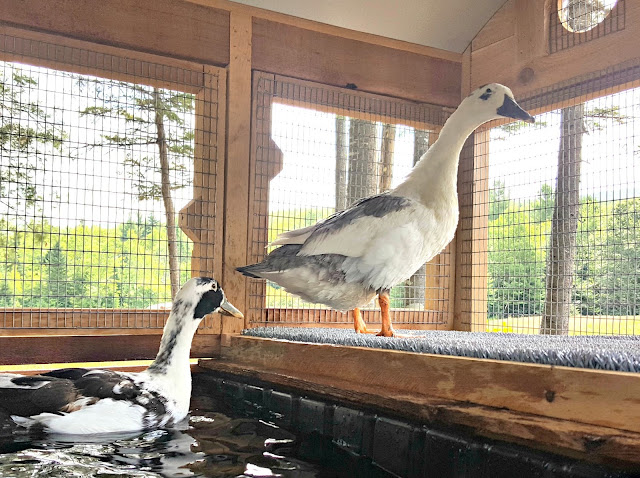 Introducing the urban coop company round top duck house for Duck and goose houses
