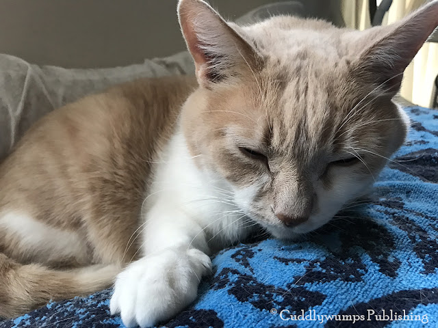 Real Cat Webster's sleepy selfie_February 2018