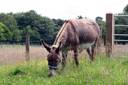 Donkeys welcomed to Cats Protection