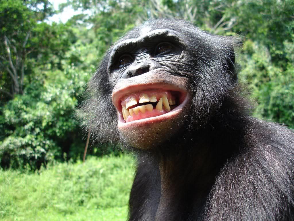 3d animals wallpaper ape - photo #10