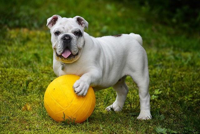 Top 10 Popular Medium-Sized-Dog Breed In The World