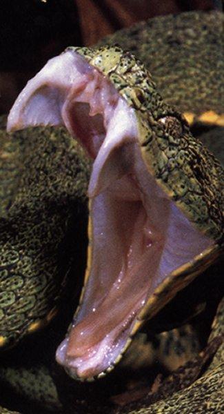 Animals World: Amazing king cobra