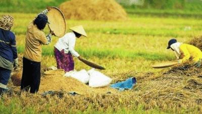 Forum dan Komunitas Pertanian Indonesia – Agroteknologi.web.id