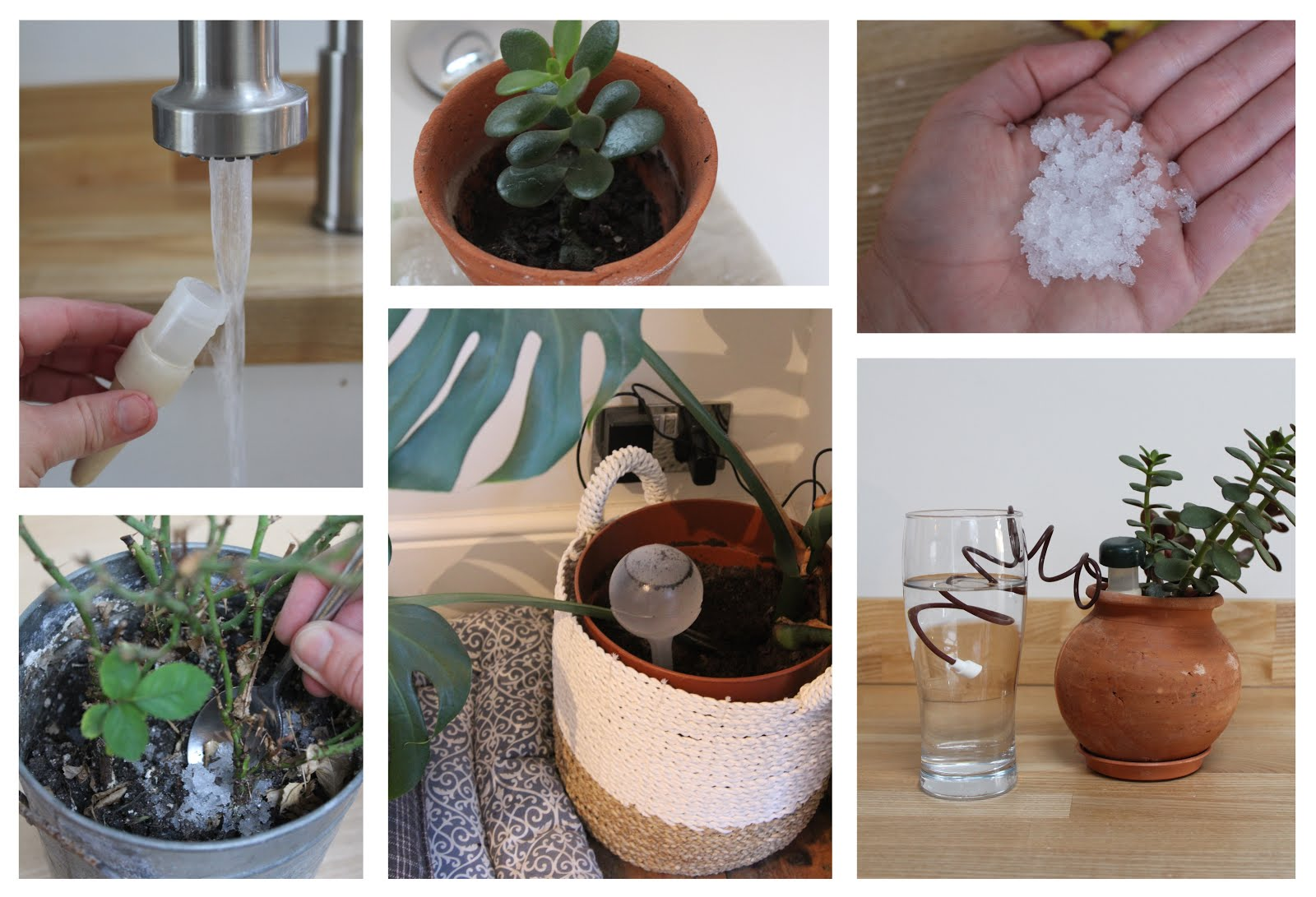 How to Keep House Plants Watered When You're Away