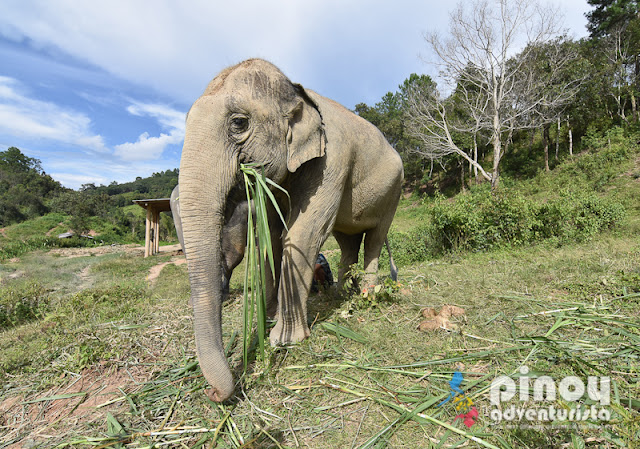 Elephant Nature Park in Chiang Mai Thailand