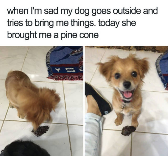 When i'm sad my dog goes outside and tries to bring me things. Today she brought me a pine cone.