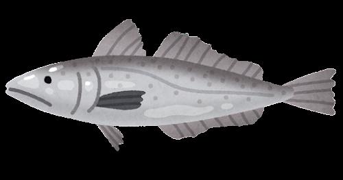 メルルーサのイラスト(魚)