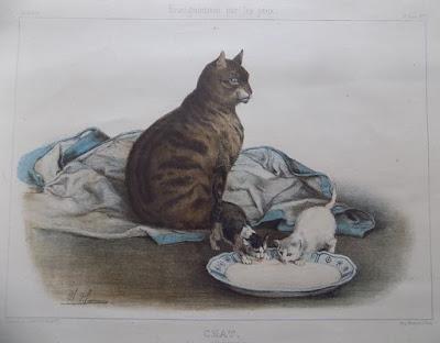 Chat, image Hachette, illustration CH. O. de Penne, 37 cm x 2 cm (CANOPE)