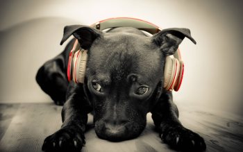 Wallpaper: Beats By Dr. Dog