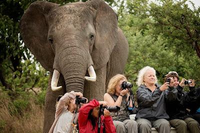 Elefante sorprende a turistas