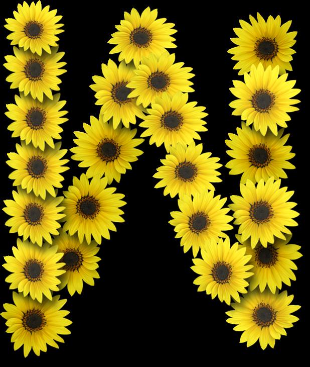 Alfabeto Flores Margaridas Com Letras Em Png Fundo Transparente