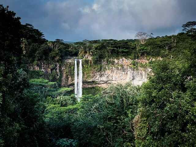 20% of Earth's oxygen is produced by the Amazon rainforest Science Fact