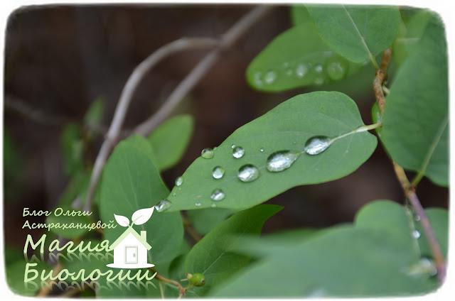 игра-с-пипеткой-листья-растений-смачивание-капиллярные-силы