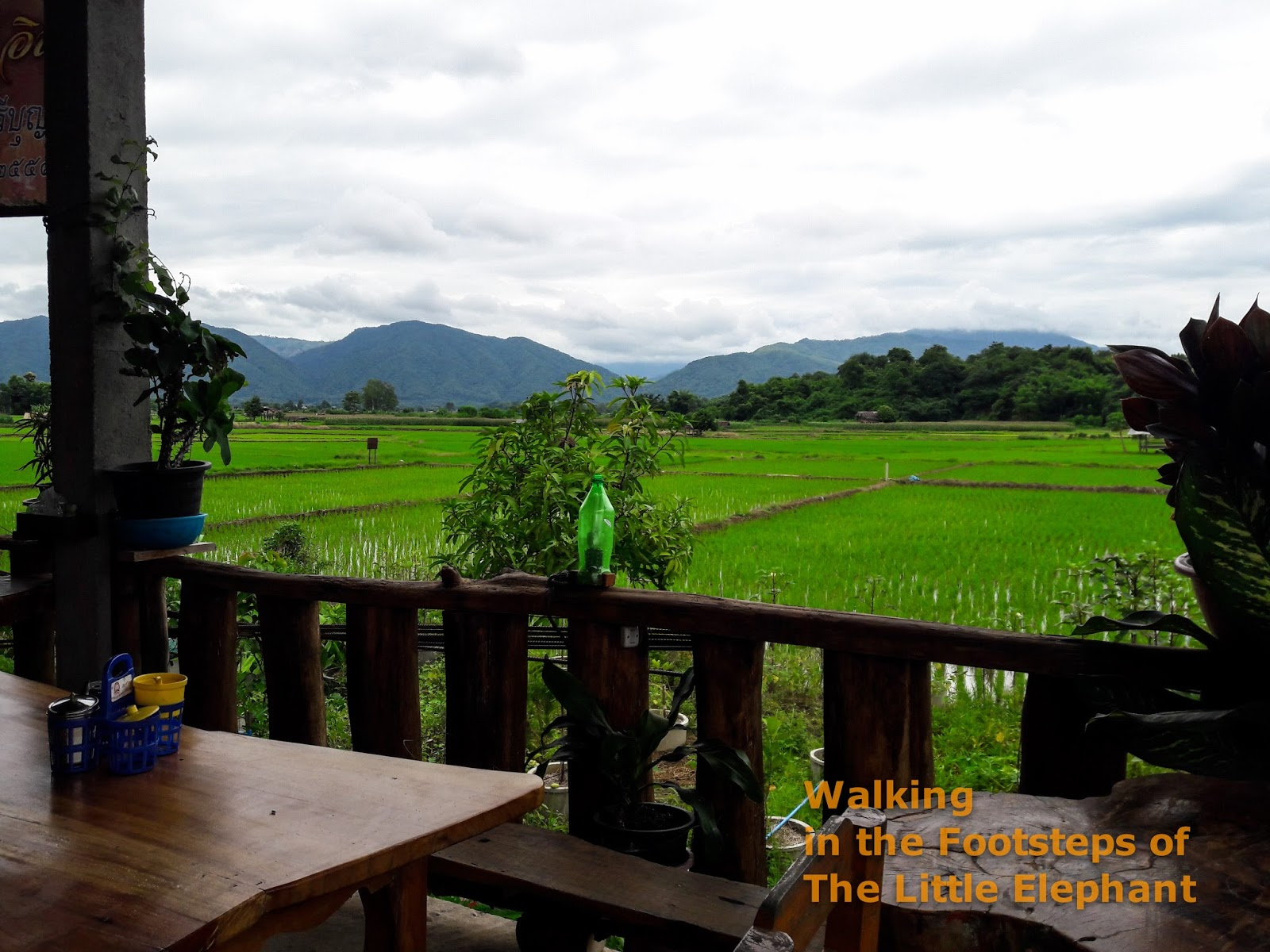 Great location in the middle of the green rice fields of chiang