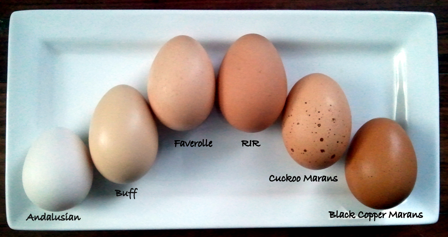 Blue Isbar Chicken Eggs
