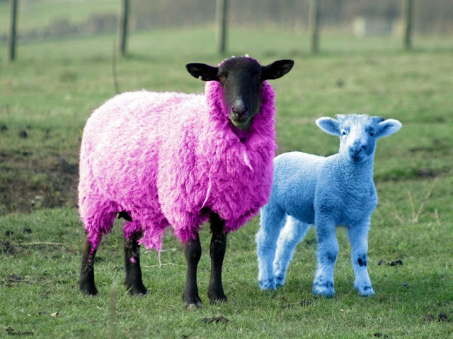 Fashion lamb