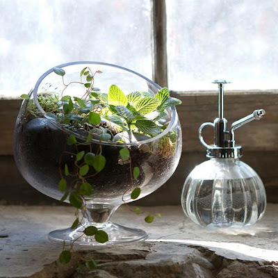 12 Must Have Terrariums For Your Home.