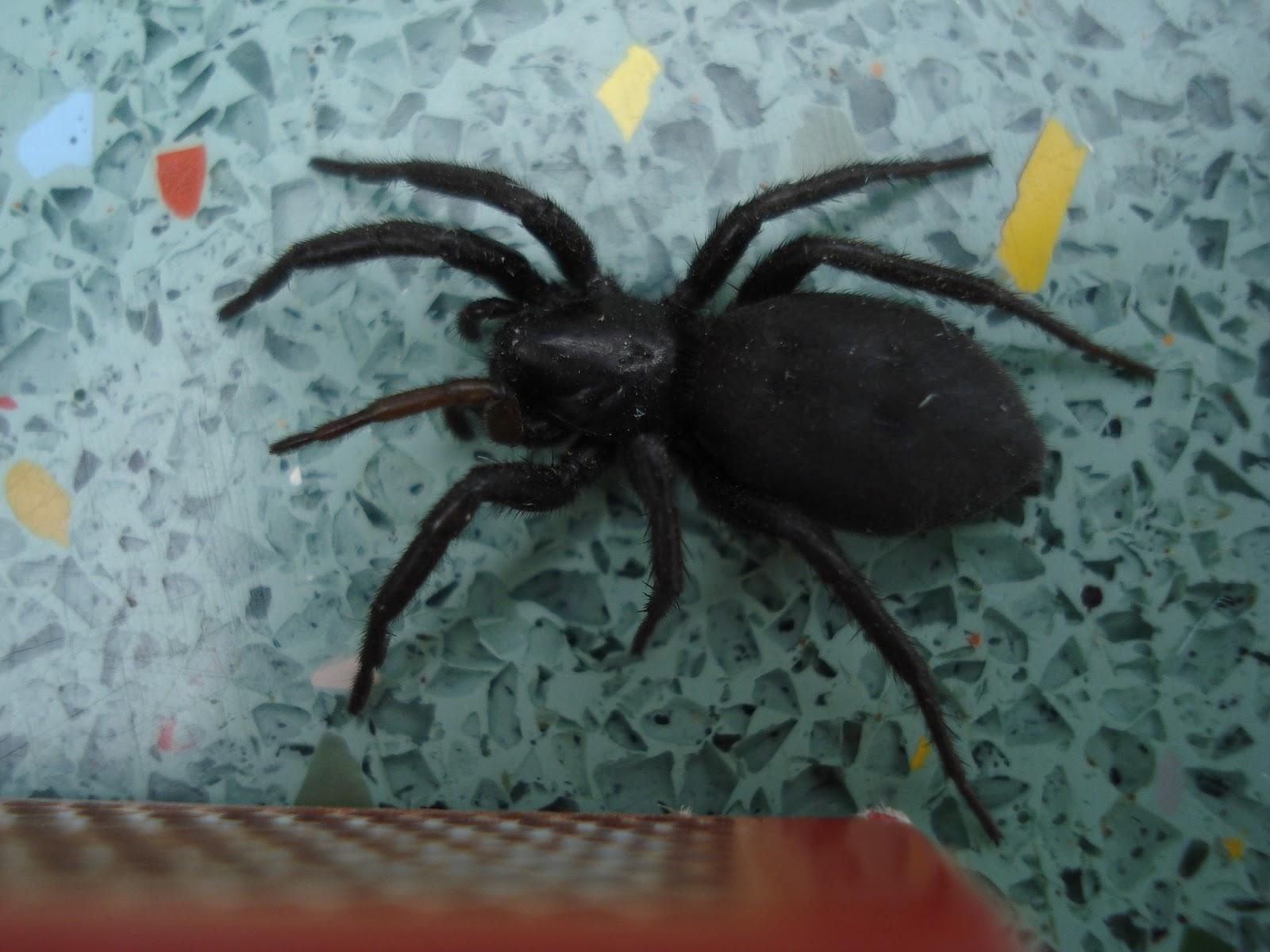 Hämähäkki Askartelu
