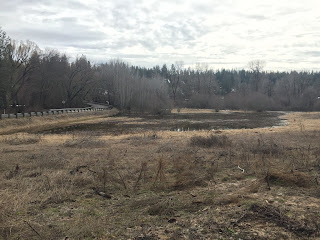 Wetland connected to Little Spokane River.