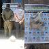 Brigada Militar prende dupla pelos crimes contra fauna no interior de Santiago